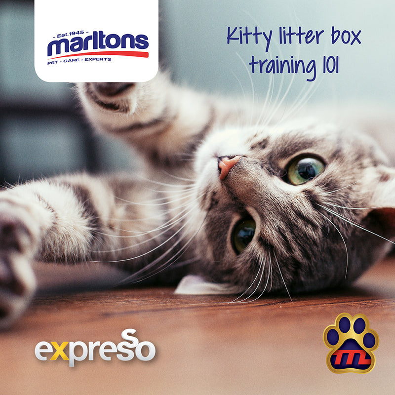 The Importance of Cat Litter Training