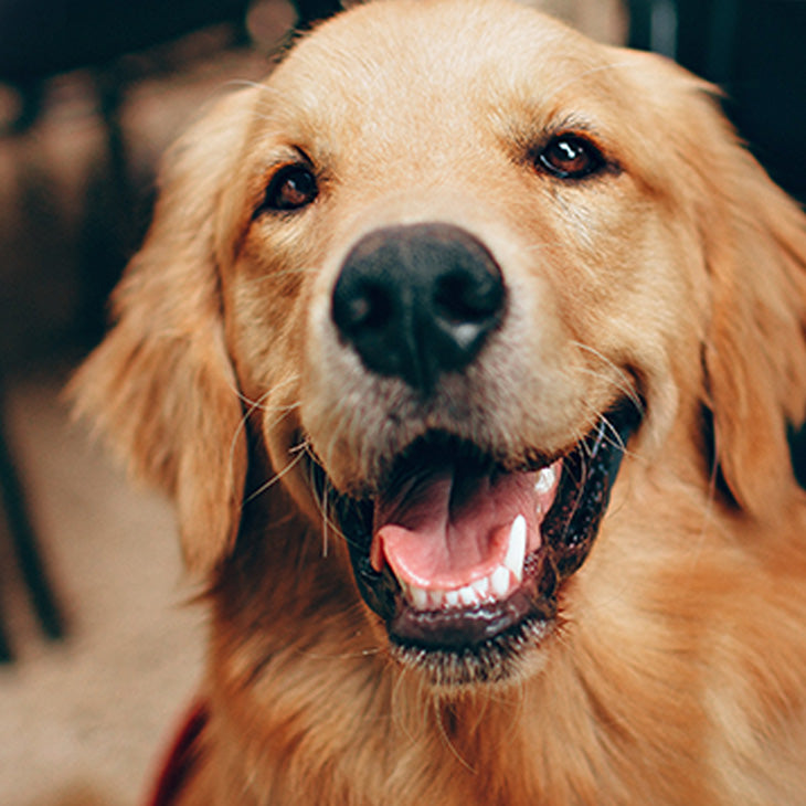Dental Care & Hygiene for Dogs