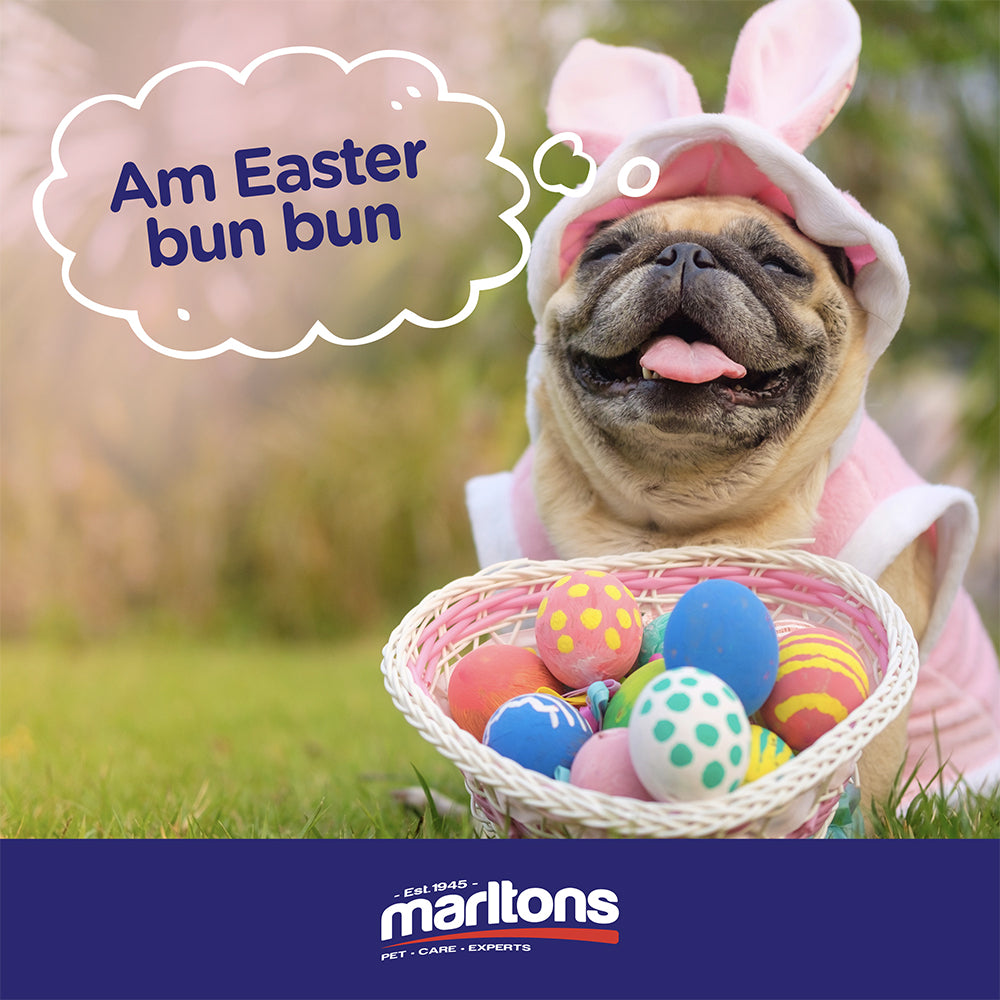 4 EASTER PET SAFETY TIPS