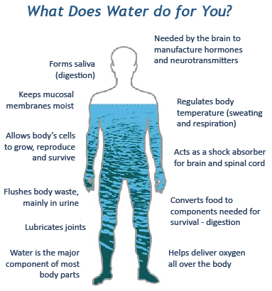 diagram with a human body filled with water highlighting the benefits of water.