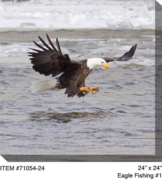 Eagle Fishing # 1