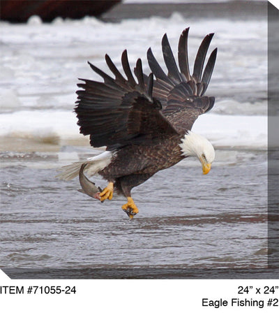 Eagle Fishing # 2