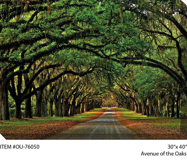 Avenue of the Oaks