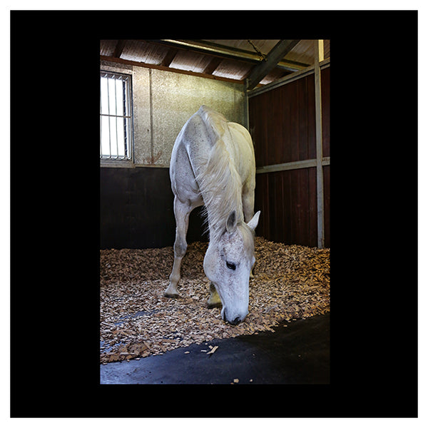 ComfortStall - Unique orthopedic padded and 100% sealed flooring system for stables