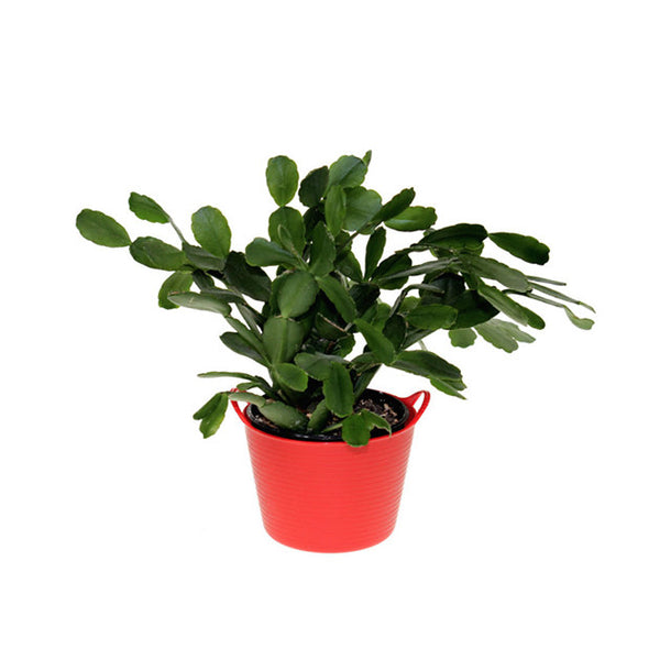 Tubtrugs® Flexible Micro Planted