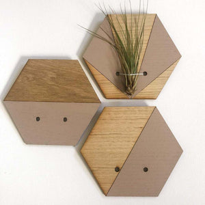 Blush V Hexagon Wall Hanging Planter for Air Plants Display