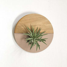 Load image into Gallery viewer, Blush Round Wall Hanging Planter for Air Plants Display