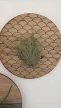 Load and play video in Gallery viewer, Small Round Engraved Wall Hanging Planter for Air Plants
