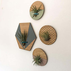 Small Round Engraved Wall Hanging Planter for Air Plants