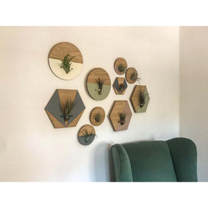 Cream Round Wall Hanging Planter for Air Plants Display