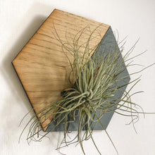Load image into Gallery viewer, Grey Hexagon Wall Hanging Planter for Air Plants Display /