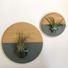 Load image into Gallery viewer, Grey Round Wall Hanging Planter for Air Plants Display
