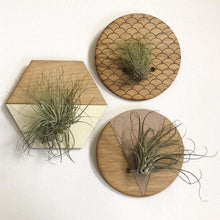 Load image into Gallery viewer, Small Round Engraved Wall Hanging Planter for Air Plants