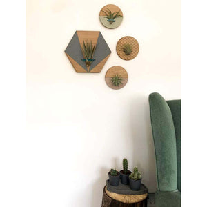 Blush Round Wall Hanging Planter for Air Plants Display