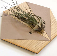 Load image into Gallery viewer, Blush V Hexagon Wall Hanging Planter for Air Plants Display