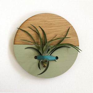 Sage Round Wall Hanging Planter for Air Plants Display