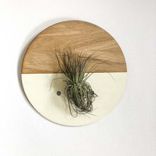 Load image into Gallery viewer, Cream Round Wall Hanging Planter for Air Plants Display