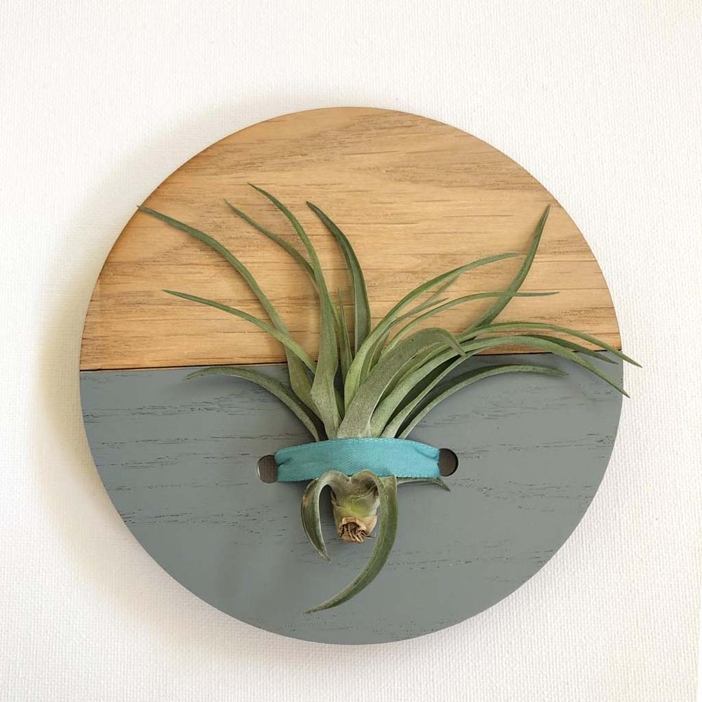Grey Round Wall Hanging Planter for Air Plants Display
