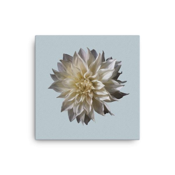 Dahlia - Chalk Grey Canvas-Tiny Potager-16×16-Tiny Potager