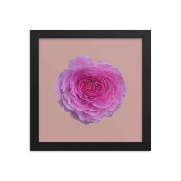 The Audrey Rose - Dusky Rose Framed Poster-Tiny Potager-Black-10×10-Tiny Potager