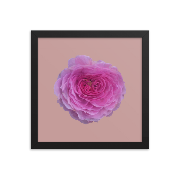 The Audrey Rose - Dusky Rose Framed Poster-Tiny Potager-Black-12×12-Tiny Potager