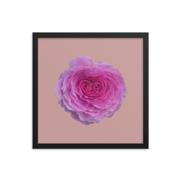 The Audrey Rose - Dusky Rose Framed Poster-Tiny Potager-Black-16×16-Tiny Potager