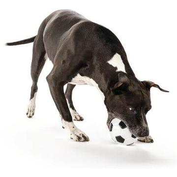 Planet Dog Orbee-Tuff Soccer Ball Football For Dogs