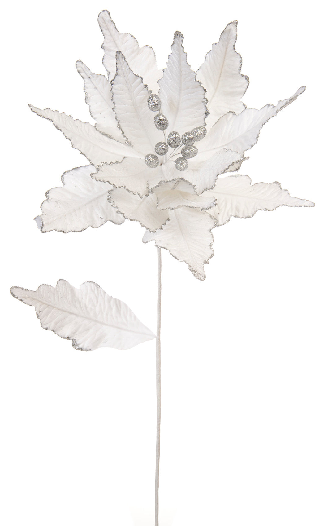 White velvet poinsettia