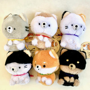 63202 CAT & DOG PLUSH CHARM-SMALL-6 assorted pieces