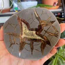 Load image into Gallery viewer, Septarian Slab