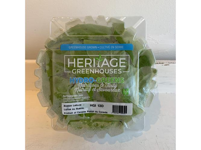 Heritage Boston Lettuce
