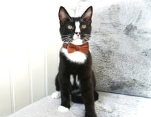 Load image into Gallery viewer, Glamour Puss Velvet Bow Tie Collar
