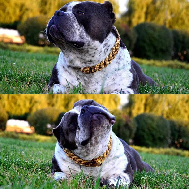 Heavy Duty Metal Chain Collar for Large Dogs