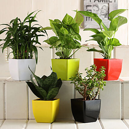 Indoor Plants as Gifts.
