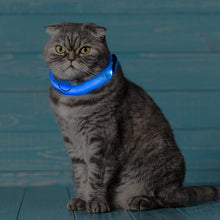 Load image into Gallery viewer, Glow Collar - keeps your pet safe!