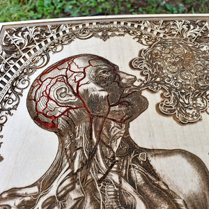 Graduation Gift Medical School, Nurse Graduation, Apothecary Cabinet, Human Anatomy, Anatomy Art, Wood Wall Art, Laser Engraved