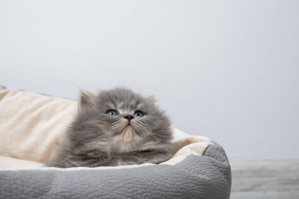 Couchages Pour Chat