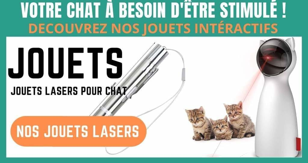 jouets lasers pour chat