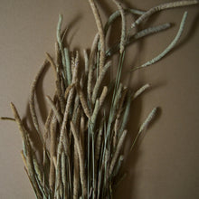 Load image into Gallery viewer, Dried Phleum Pratensis