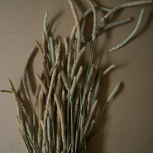 Dried Phleum Pratensis