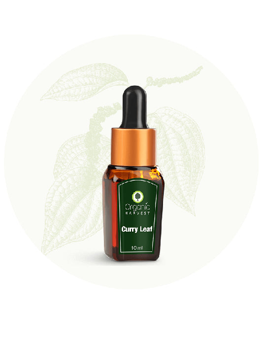 (Organic Harvest) Curry Leaf Essential Oil (10ml)
