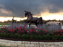 "Load image into Gallery viewer, "" Stepping High"" Life Size Saddlebred Horse Bronze Sculpture.    84"" high"