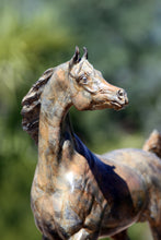 "Load image into Gallery viewer, "" Arabian Stallion "" bronze sculpture"