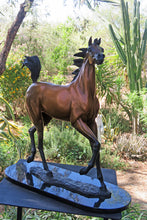 "Load image into Gallery viewer, "" Superstar "" Arabian horse bronze sculpture."