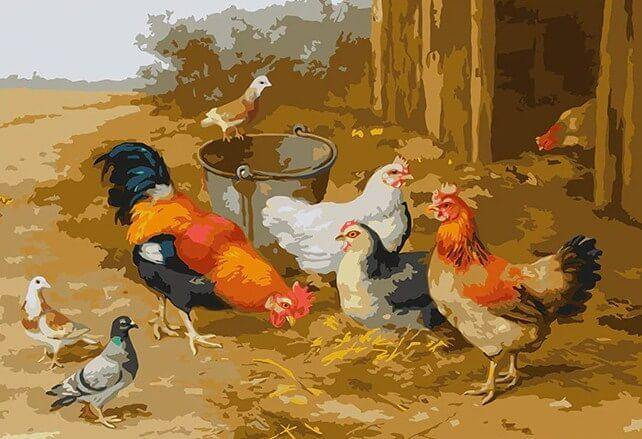 Chickens & Pigeons DIY Painting - All Paint by Numbers