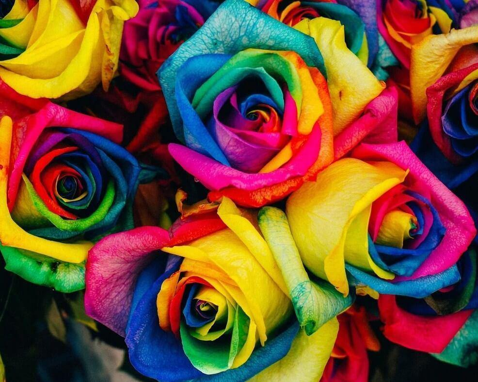 Colorful Roses Paint by Numbers