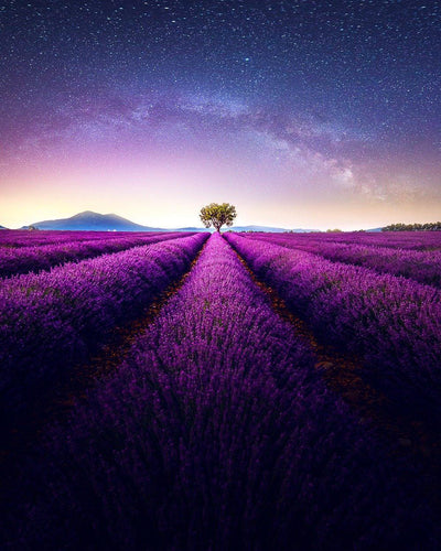 Lavender Heaven - PBN Art Kit