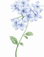Load image into Gallery viewer, Jasmin Flower Painting