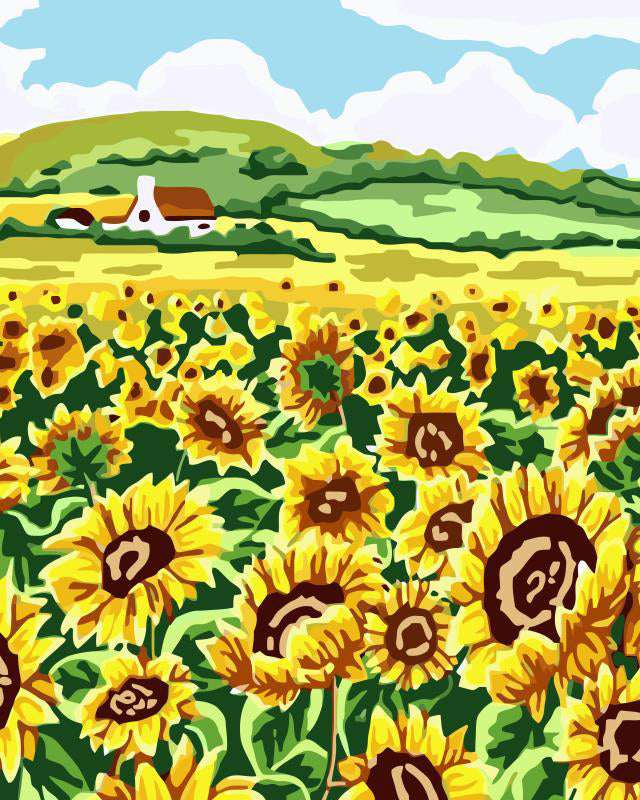 Field of sunflowers on a farm.