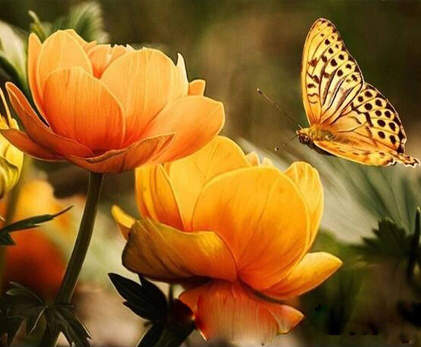 Yellow Flowers & Butterfly